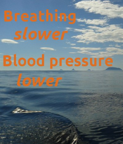 how does slow breathing lower blood pressure